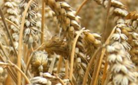 Минсельхоз поможет крестьянам брать кредиты под залог урожая