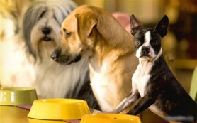 Общие правила кормления собак