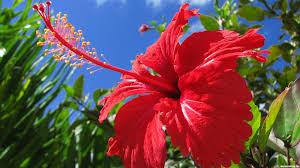 Целебные свойства домашних растений
