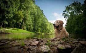 На отдых с собакой