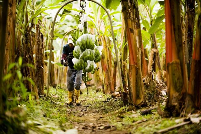 ВТБ продал банановые плантации в Эквадоре за $30 млн