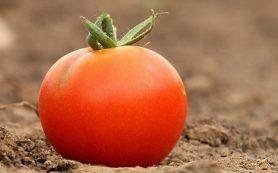 Россельхознадзор прекратил ввоз африканских помидоров из Белоруссии