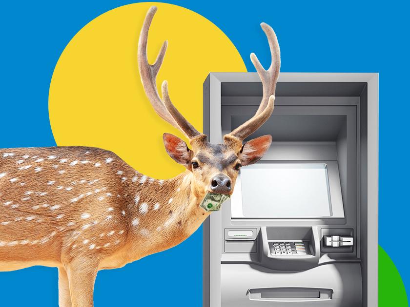 Олени против банкиров: как живут и работают банки на краю света