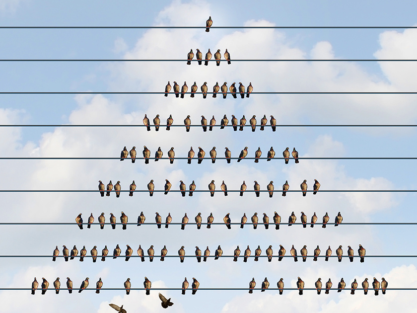 На вершине пирамиды: почему россияне не хотят расставаться с «Кэшбери»