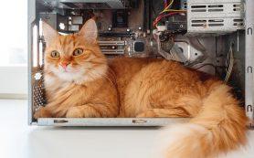 Провода, коты и прочие неприятности