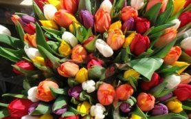 Красочная доставка цветов – универсальность презента