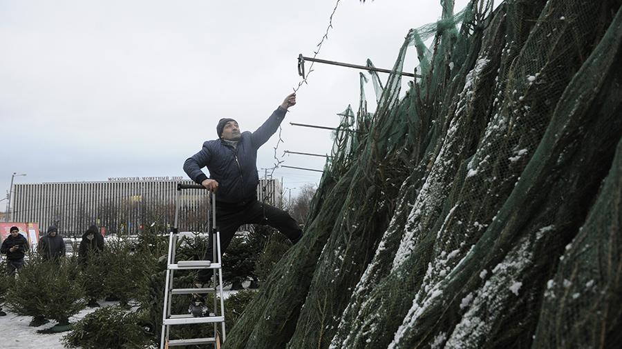 Ель на выдумки хитра: средний чек на новогодние деревья упал на 10%