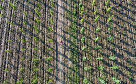 Рынок лесовосстановления вырастет до десятков млрд рублей в год