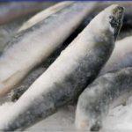 """Росрыболовство сомневается в эффективности введения """"рыбных интервенций"""" на минтай"""